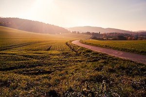 LAND & FARMS
