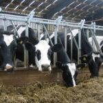 FARM CONSULTANNCY