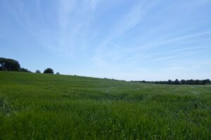 LET AGREED – 81.37 acres of Arable Land at Sands Farm, Calne, Wiltshire, SN11 8TJ