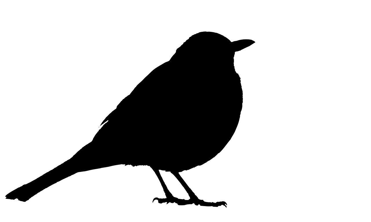 blackbird, silhouette, black