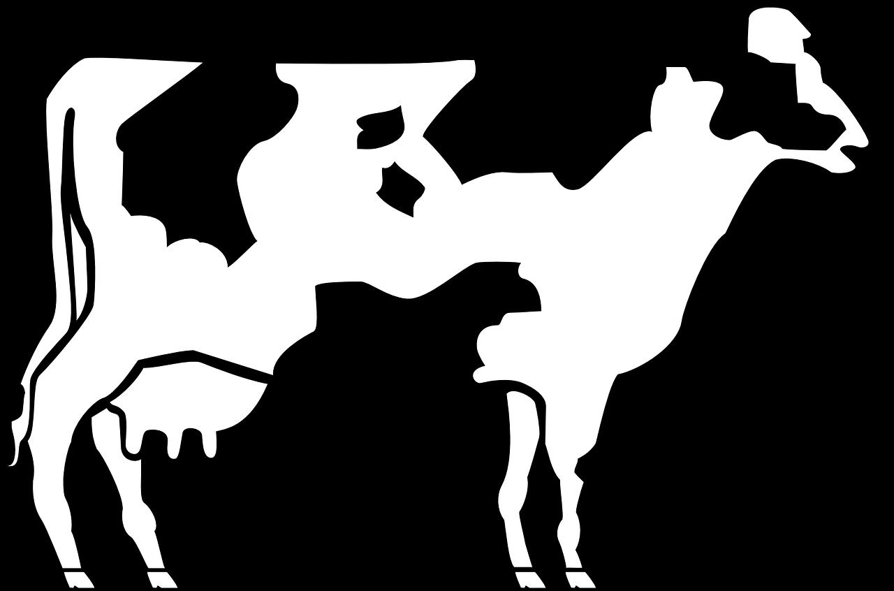 cow, livestock, cattle
