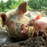FARM BUSINESS TENANCIES